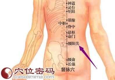 人体的腰部在哪个部位 腰阳关穴的准确位置图